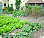 Creciendo alimentos en casa